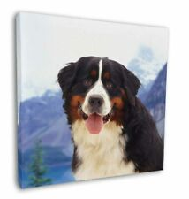 """Bernese Mountain Dog 12""""x12"""" Wall Art Canvas Decor, Picture Print, AD-BER6-C12"""