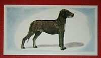 Weimaraner Dog C5 Gloss Mothers Day Card MWEIM-1 paws2print
