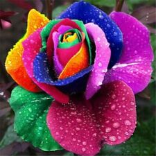 100Pcs Rainbow Rose Seeds Plants Rare Holland Flower Multi-color Plants Garden