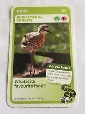 Taronga Zoo Woolworths Aussie Animal Card #13 Bush Stone Curlew
