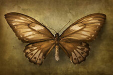 STUNNING BUTTERFLY VINTAGE ANTIQUE STYLE #19 QUALITY A1 CANVAS PICTURE WALL ART