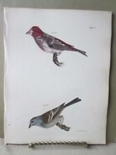 Vintage Print,Birds,Crested Purple Finch,Tree Bunting,Zoology,Ny,Fauna, 1844