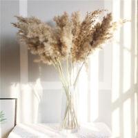 5 Stk Natürlich Getrocknet Blume Pampas Gras Zweig Ornament Hochzeit Home Decor