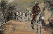 Pack Train in the Mountains Donkeys Antique Postcard J60828