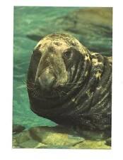 BALTIMORE MD National Aquarium Grey Seal Postcard