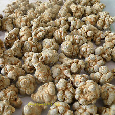 Authentic Yunnan Organic Notoginseng Tien Chi Root Health Care 500g *ON SALE*