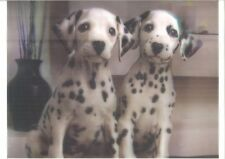 dogs funny 5D Lenticular raster Holographic Stereoscopic Picture Wall Art