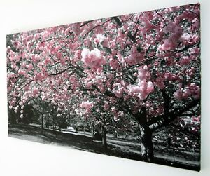 PINK BLOSSOM ON BLACK AND WHITE CANVAS PRINT WALL ART PICTURE 18 X 32 INCH