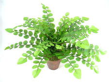 Potted Artificial Silk Pellaea Rotundifolia Fern Plant