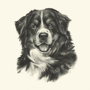 Dog Show Ring Number Clip Pin Breed - Bernese Mountain Dog