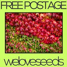 LOCAL AUSSIE STOCK - Boston Ivy Creeper, Parthenocissus Tricuspidata Seeds ~20x