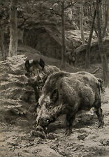 Antique Rosa Bonheur Old Vintage Art Print Wild Boar Wildlife Animal Hunting