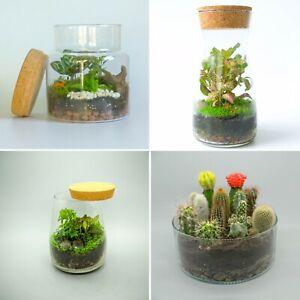 Terrarium Kit with Glass Jar DIY kit Weekend Activity Kit, Unique Gift