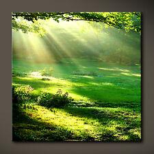 DAYLIGHT Leinwand Bild Bilder Grün Natur Baum Wald Park Sonne Licht Landschaft X