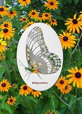 Butterfly Oval Window Decal 4x6 inches Static Cling White & Clear Glass Decor