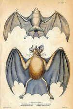 Vintage Halloween Vampire Bat Quilting Fabric Block 8x10