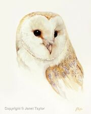 BARN OWL:  Fine Art Print of a watercolour painting by Jan Taylor.  Bird Art
