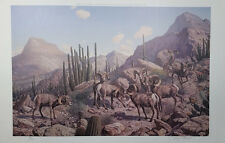Harry Curieux Adamson - Conclave, Desert Bighorns Print, S/N