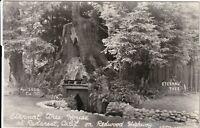 Eternal Tree House Redwood Highway Redcrest CA Vintage RPPC Postcard California