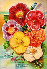 G Bulbs for 50 Cents Vintage Flowers Seed Packet Catalogue Advertisement Poster