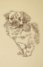 Tibetan Spaniel Dog Art Portrait Print #24 Kline adds dog name free Word Drawing