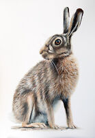 HARE ORIGINAL WATERCOLOUR PAINTING A3, Fine Art, Wildlife, By Sarah Featherstone