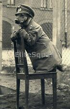 WW2 Photo Picture Dog in German uniform WWII 230 DE