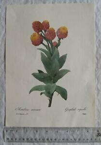 Print of Astelma eximium, Graphale superbe