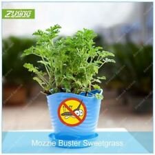 100 PCS Mozzie Buster Sweetgrass Seeds Bonsai Indoor Aromatic Plants Ornamental