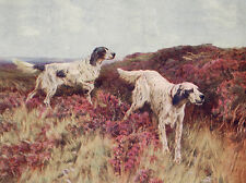ENGLISH SETTER CHARMING DOG GREETINGS NOTE CARD TWO DOGS IN THE HEATHER