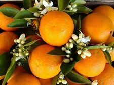 Orange Patchouli Fragrance Oil Candle/Soap Making Supplies *Free Shipping *