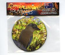 Australian Kookaburra, Photo, Image, Fridge Magnet, Souvenir.