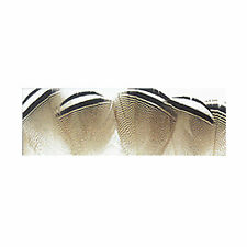 Wapsi Wood Duck Feathers Black & White
