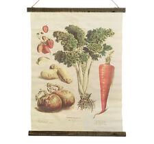 Schulwandkarte Wandbild Biologie Gemüse Vintage Veggie Leinwand 72x55cm