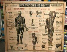 Ancien poster scolaire original scientifique 7 CORPS HUMAIN SANG OS Colin Paris