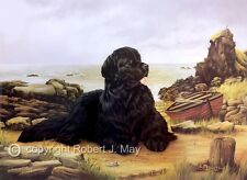 More details for newfoundland limited edition dog print by robert j. may