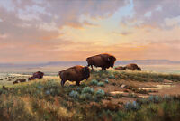 Hot HD Print Oil painting Picture TX Animals Buffalo on canvas 12x16 inches L183
