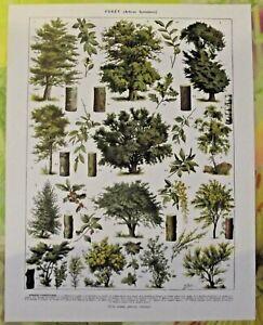 Art Print image Antique Book Page Hêtre Chêne Cornouiller Buis Genêt botanique