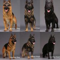1:6 Scale Mr.Z Animal Dog Toy Resin German Shepherd Police Figure 3 Color Model