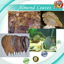 Indian Almond Leaves, A+ Catappa Ketapang for Fish, Shrimp, Aquarium Free Ship