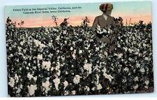 *Cotton Field Imperial Valley Colorado River Delta California Old Postcard B84