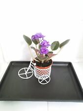 MiniGardenn - Novelty African Violet Plant - with Mini Bicycle