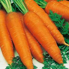Carrot 'Kelly' F1 Hybrid'Large Varity 400 Seeds