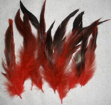 10 Red Rooster feathers 3