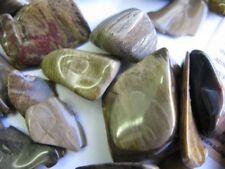 10 X PETRIFIED WOOD Tumbled gem stones, Crystal, Australian, Natural, Specimen