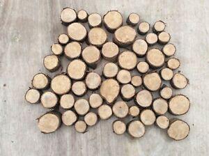 50 small log slices, decorative logs, display, hardwood