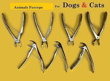 Extraction-Forceps for Small Animal Dentistry Feline Rodent-Dentistr