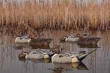 Avian-X Top Flight Fusion Series Pintails Waterfowl Hunting Ducks New!