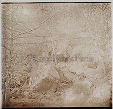 Forêt de Fontainebleau Photo Stereo R6 Verre Positive Vintage 1909