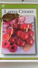 4' live Lapins Cherry Tree Sweet Fruit Cherries Trees Plants Garden Plant